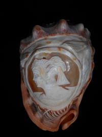 Conch Shell carved Cameo